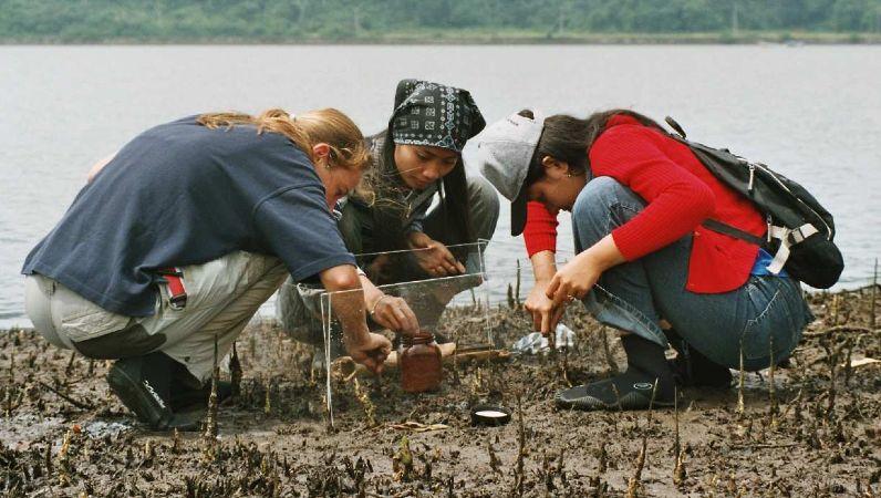 Deutsche und indonesische Wissenschaftler untersuchen eine Lagune auf Java, Indonesien.